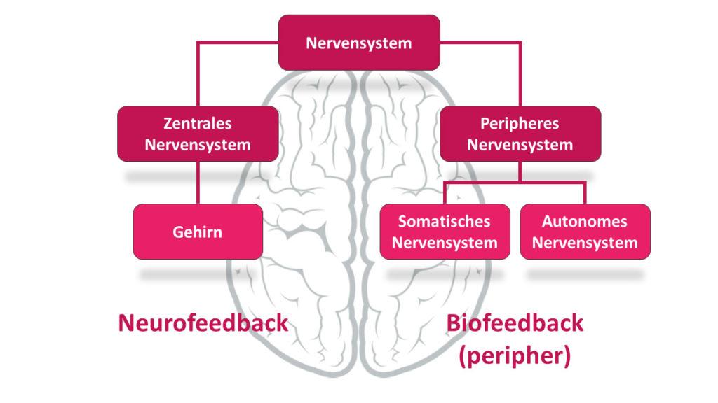 Unterschied zwischen Biofeedback und Neurofeedback